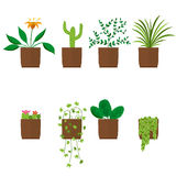 Flowers in pots. House plant. Flat style. Palm cactus ficus and others. Vector illustration royalty free illustration
