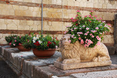 Flowers in pots near the stone sculpture of a lion Stock Photos