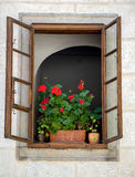 Flowers in pots in the open window. Of the historic house Stock Image