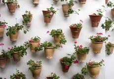 Flowers in pots in Palacio de Viana Cordoba Stock Image