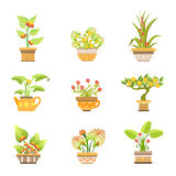 Flowers In Pots Set Stock Photography