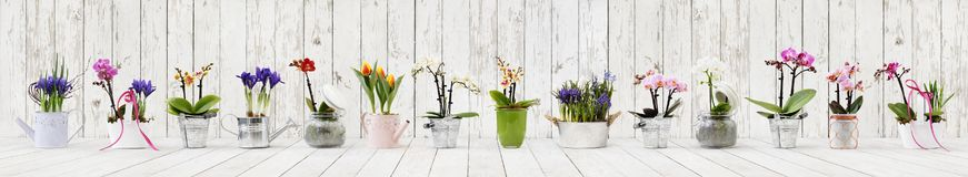 Flowers in pots set isolated on white wood background, web banner with copy space for florist shop. Concept royalty free stock photography