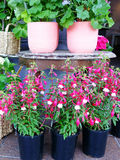 Flowers in Pots at Shop Royalty Free Stock Images
