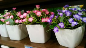 Flowers pots Royalty Free Stock Photo