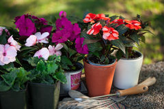 Flowers in the pots Royalty Free Stock Photos
