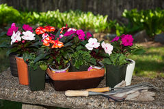 Flowers in the pots Royalty Free Stock Images