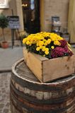 Flowers in pots Stock Photo