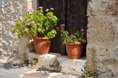 Flowers in pots. Stock Image