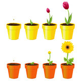 Flowers In Pots. Vector Royalty Free Stock Photo