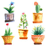 Flowers and pots. Watercolor illustration of flowers and pots in vector format. All the flowers in pots can be changed stock illustration