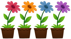 Flowers in pots on white. Illustration Stock Image