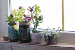 Flowers in the pots on the window shelf, modern apartment spaces. Flowers in the pots on the kitchen window shelf, modern apartment spaces royalty free stock images