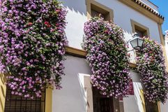 Flowers in pots on the windows in Cordoba streets, Spain. Andalusia royalty free stock photography