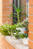 Flowers in pots on  windowsill. Royalty Free Stock Photos