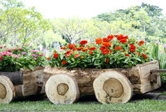 Flowers in pots in wooden box Royalty Free Stock Photos
