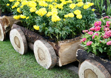 Flowers in pots in wooden box Stock Images