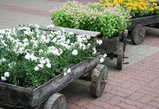 Flowers on pots in wooden box Stock Images