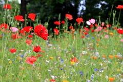 Flowers, Potsdam Royalty Free Stock Photos
