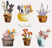 Flowers in a potters. Spring garden. Cute flowers in potters. Spring garden Stock Photos