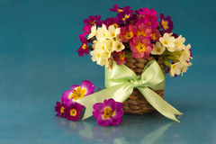 Flowers in the primroses in basket Royalty Free Stock Photo
