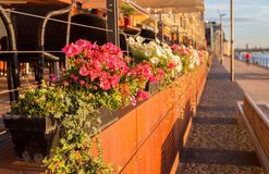 Flowers at a promenade. Flowers in the Rheinhauhafen cologne germany Royalty Free Stock Image