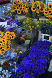 Flowers at a Provencal market Royalty Free Stock Photos