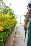 Flowers prune Stock Photography