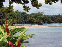 Flowers in Puerto Viejo. Coastline in Puerto Viejo with flowers in foreground stock photo