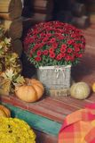 Flowers and pumpkin Royalty Free Stock Image