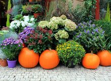 Flowers and pumpkins Stock Images