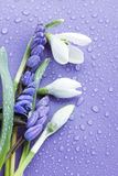 Flowers on the purple. The bouquet of spring flowers to purple the background royalty free stock photography