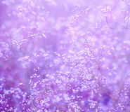 Flowers purple background. Purple background with small flowers Royalty Free Stock Photography