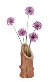 Flowers purple decorative onion Allium in wooden vase Royalty Free Stock Photo