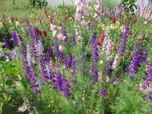 Flowers. Purple flowers, flowerbed, flower, more colors Stock Images