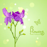 Flowers purple Royalty Free Stock Image