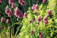 Flowers purple long stem Stock Photography