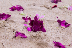 The flowers of purple orchids on the sand beach after rain. Travel to Krabi, Thailand. The flowers of purple orchids on the sand beach after rain Stock Photo