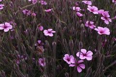 Flowers, Purple, Purple Flower Royalty Free Stock Image