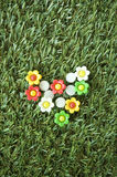 Flowers pushpins Royalty Free Stock Image