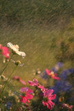 Flowers in the Rain Stock Photo