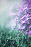 Flowers in rain Stock Photography