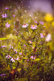 The flowers in the rain. Rain in the garden, the flowers in the rain Royalty Free Stock Photography