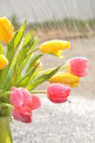 Flowers in the Rain Stock Photos