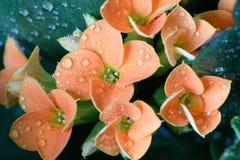 Flowers in rain. Flowers in garden rainy day Stock Photo