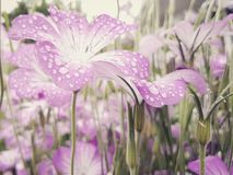 Flowers in the rain Royalty Free Stock Photo