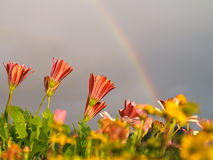 Flowers and rainbow Royalty Free Stock Photo