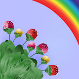Flowers and rainbow, Spring bright background Stock Photography