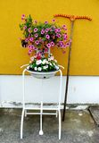 Flowers and the rake on the yellow wall royalty free stock photography