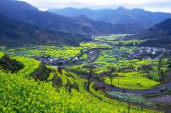 The flowers of  rapeseed plant. In Wuyuan China, the flowers of  rapeseed plant are very beautiful in March Stock Photos