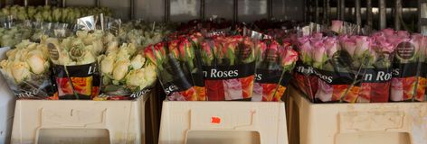 Flowers ready at the auction to be sold royalty free stock images